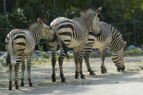 C'est un des plus beaux parcs de France où l'on peut venir flâner, se reposer, observer la diversité des animaux.