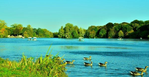 Le lac du Parc de la Tête d_Or