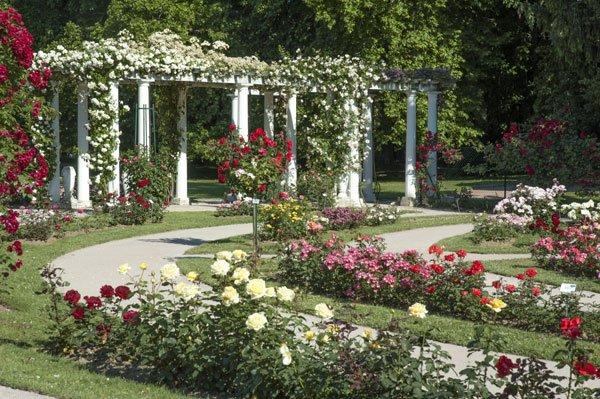 Les roseraies du Parc de la Tête d'Or à Lyon tout les photos de mariages ce fait la