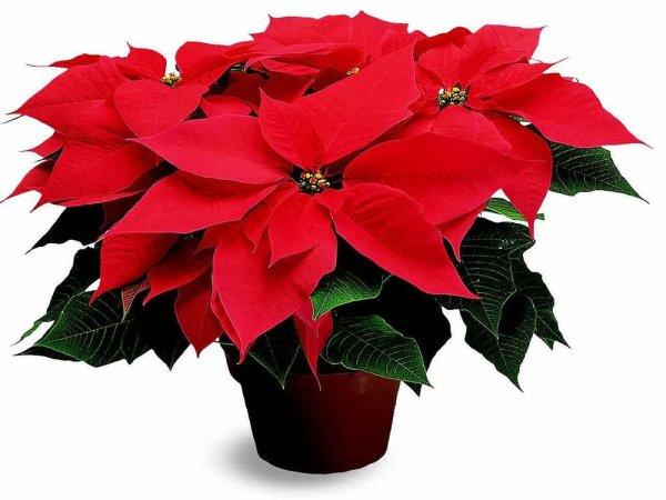 Je serais un peu au ralenti le temps des fêtes ...  Je ne posterai que des images de Noël , vos créations offertes .  Mon appareil photo sera lui aussi en pause ,   Néanmoins je passerai vous voir .  Bonne journée à vous