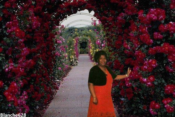 UNE ROSE PARMIE LES FLEURES UN GRAND MERCI A MON AMIE BLANCHE 628