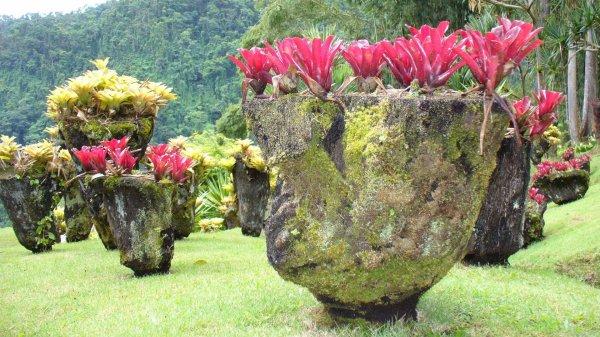 Le jardin tropical de Balata