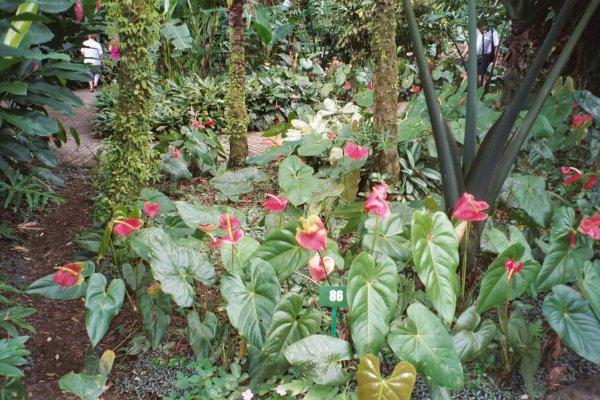 un havre de paix et d'harmonie, une balade où les sens s'éveillent, où l'esprit se libère. Vous y découvrirez les grandes variétés de la flore de Martinique sublimées dans un équilibre parfait et des paysages inoubliables.