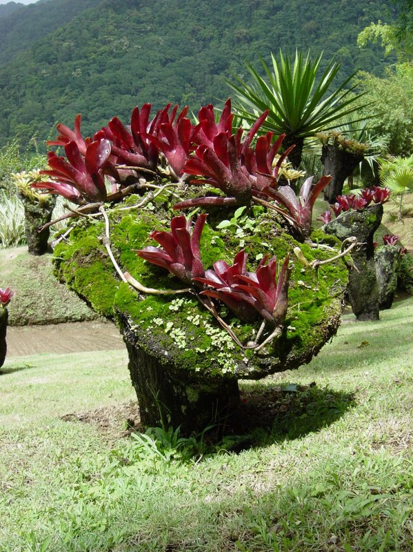 Vous êtes un amoureux de la nature ? Vous aimez les plantes exotiques et vous êtes passionnés de jardinage ? Venez découvrir le Jardin de Balata