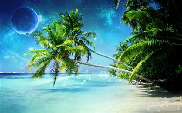 Magnifiquement sacs a main  de noix de coco