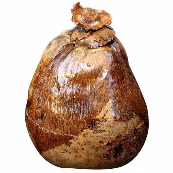 noix de coco en glacière