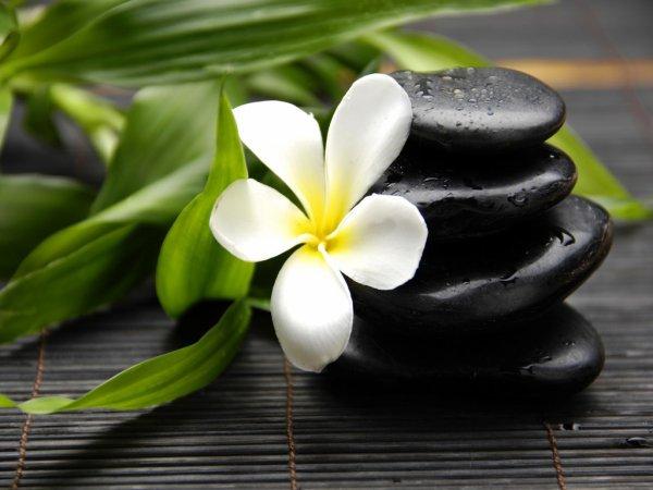 galets et fleurs zen
