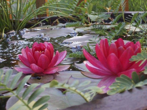L'Orchidée - Éveil de la Conscience