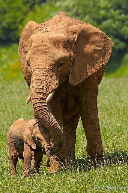 Adorables bébés animaux et leur mère:
