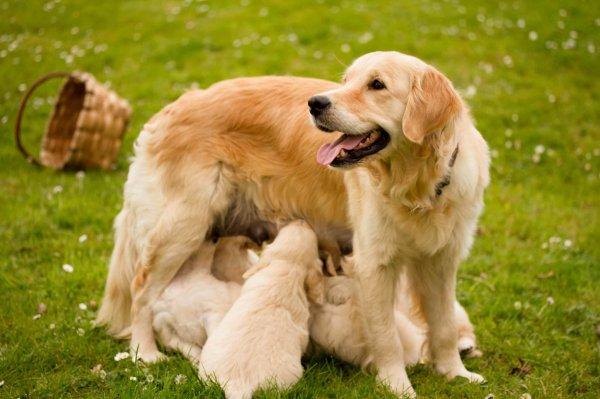 Tous les animaux sont très beaux mais il faut bien avouer qu'ils sont encore plus mignons lorsqu'ils sont petits !