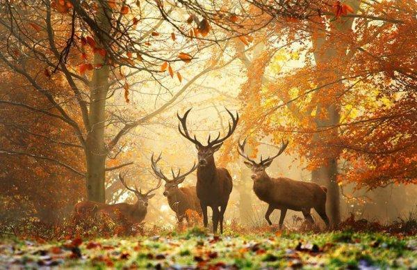 faune et flore, nature, animaux, l'automne est là