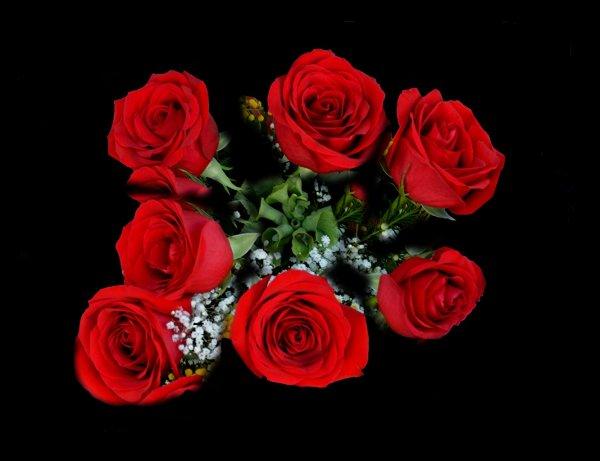 7 roses = je suis dingue de toi