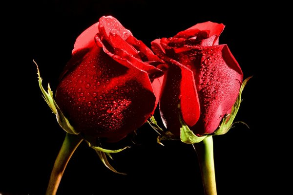 2 roses = amour mutuel
