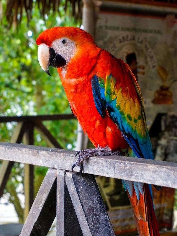 le perroquet a depuis toujours eu des points forts pour charmer les amateurs d'animaux de compagnie