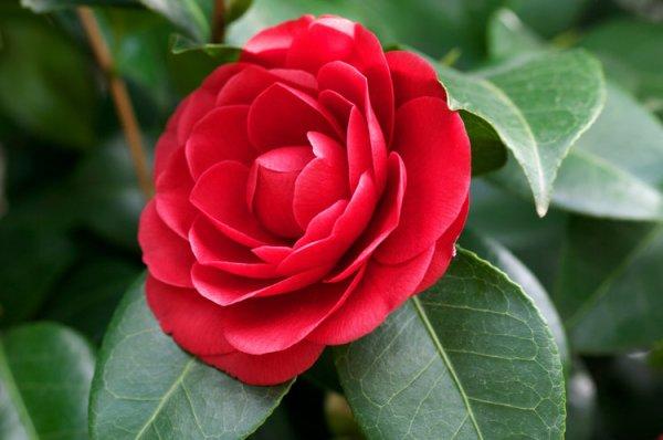 ile aux fleurs vous Accueil