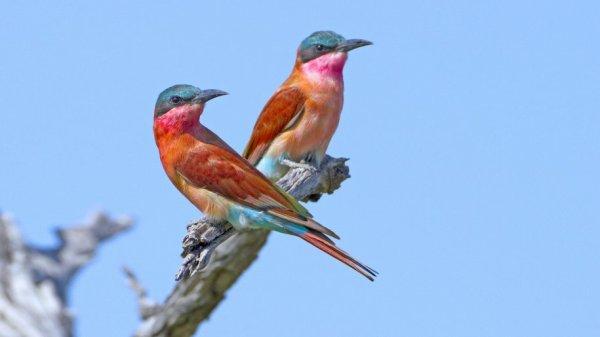 les variétés d'oiseaux