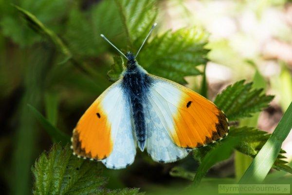 Aujourd'hui, il existe dans le monde pas moins de 160 000 espèces différentes