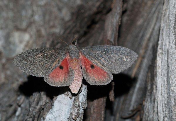 Vous les verrez de près, de très près ! Ici, le papillon n'est pas farouche, il peut même se poser sur votre épaule…