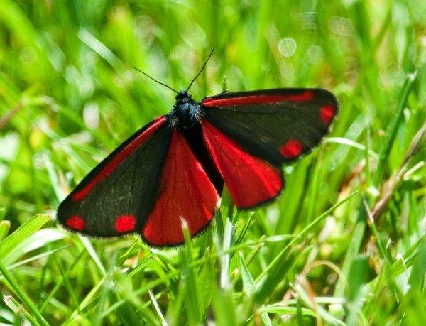 les papillons font partie des insectes les plus magnifiques.  Un vrai régal pour les yeux !