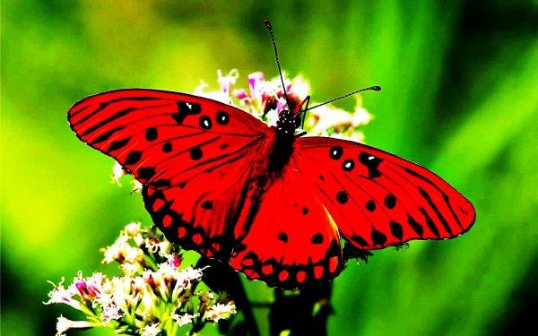 Le Tropique du Papillon est un endroit magique qui vous révélera tout sur ces insectes majestueux !
