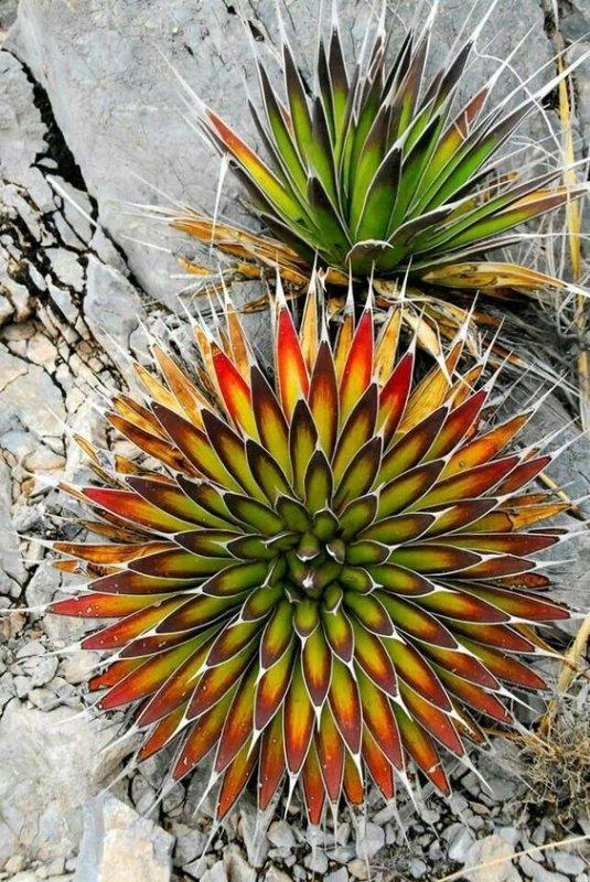 Les étonnantes fleurs d'Afrique du Sud -