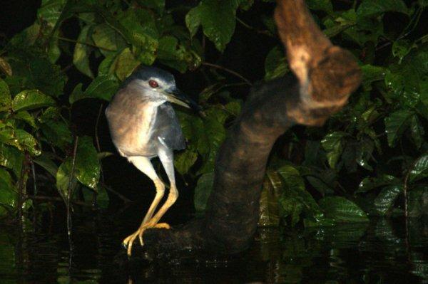La mangrove de Génipa : En bateau ou en Kayak
