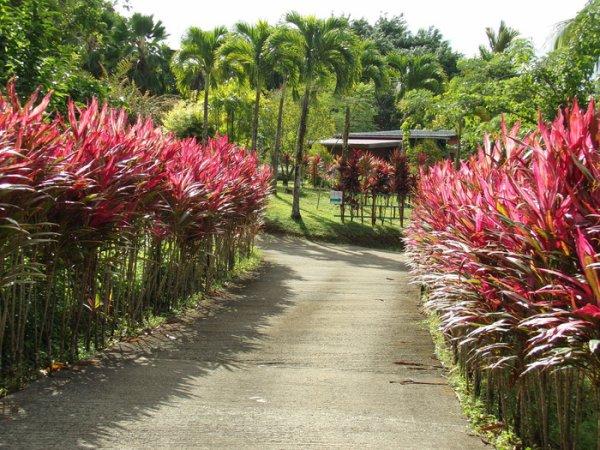 Visite jardin d'exception arboricole et fruitier + dégustation à Trinité