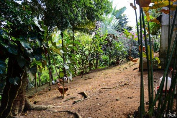 Partez en balade pour 2 heures de dépaysement dans le magnifique jardin