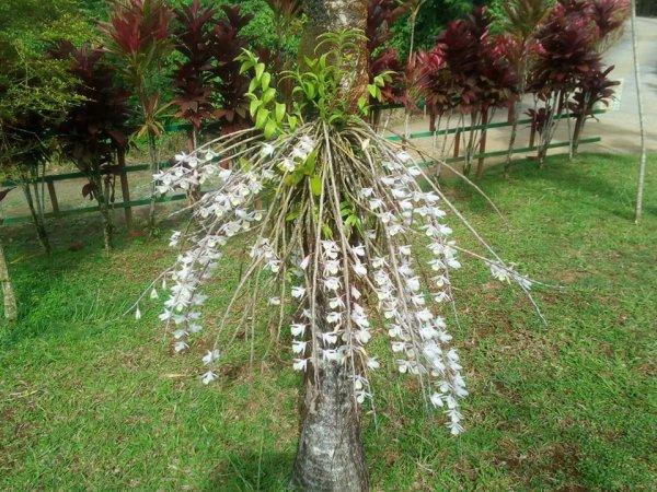 Fabuleux jardins de Martinique