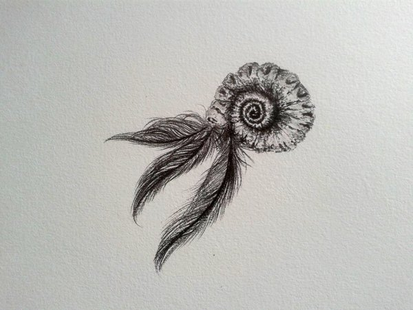 Coquillage à plumes