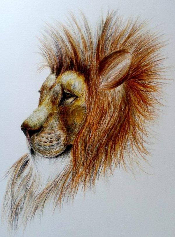 Lion aux crayons de couleurs :)