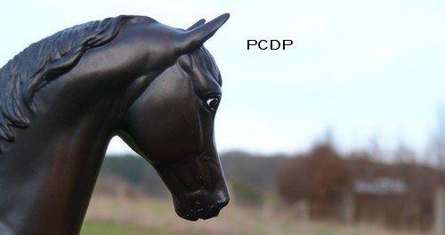 Les chevaux, leurs cavaliers et leurs compagnons...