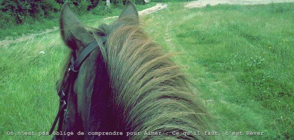 Mon Poney D'Amour ♥