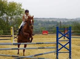 tu es peut etre mon cheval et qu'un animal mais tu es aussi mon vrais meilleur ami je t'aime mon amour de cheval