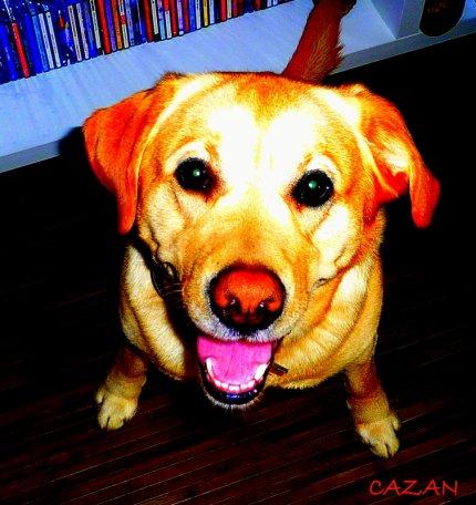 "BOUL""DOG.."