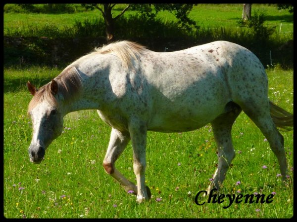 Cheyenne -  A  adoptée  !!