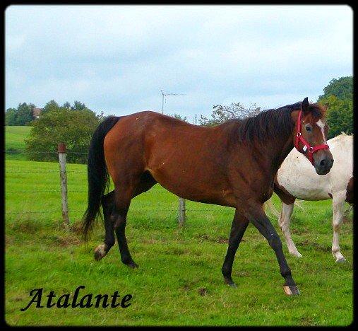 Atalante - A adoptée !!