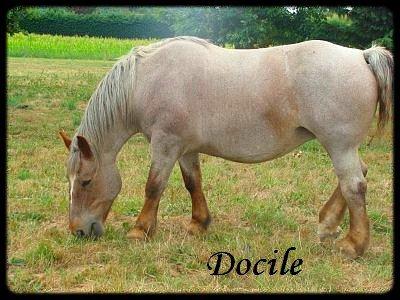 Docile - A adoptée urgent