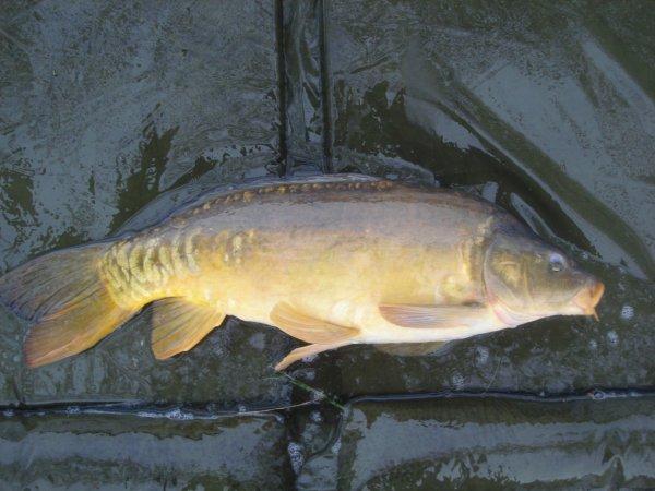 Une pêche rapide de fin d'après midi et début de soirée