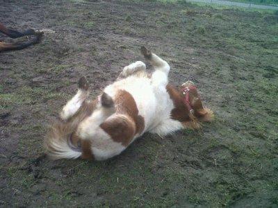 Mon poney d'amour