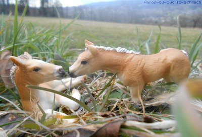 Participation au photoshow de schleich-s17122001