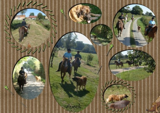 petit montage d'une sortie à cheval  ( spéciale Anouk et catherine)
