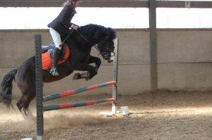 Les chevaux du Club ♥