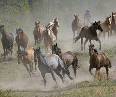 les chevaux ma passion.