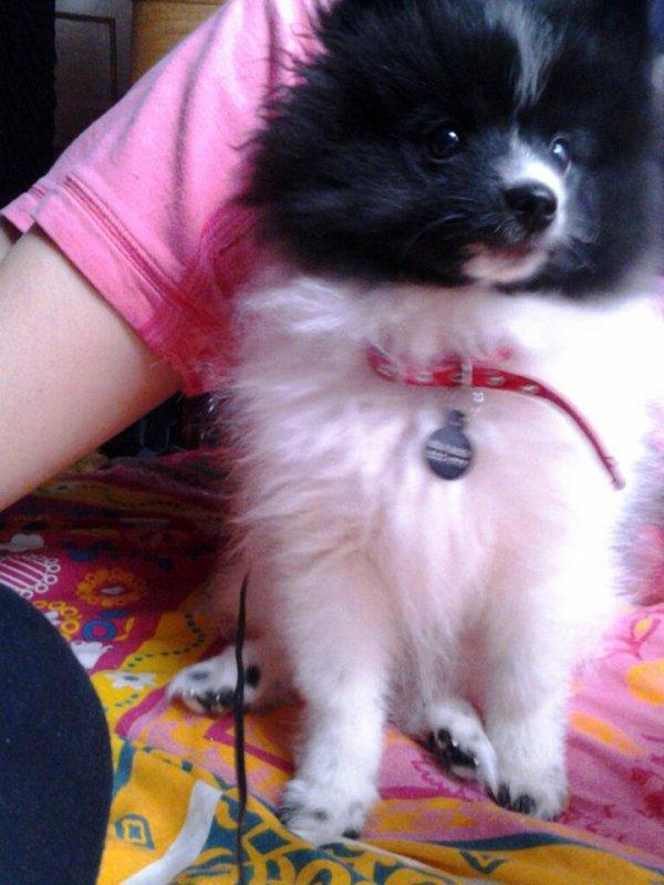 Danielle's Dog 8-23-12 R.I.P