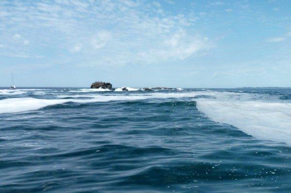 Pêche en mer dimanche 8 juin 2014