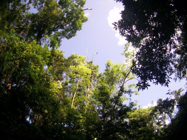 Navigation en Guyane - Canoë