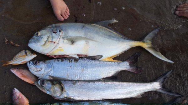 Pêche aux îles du Salut