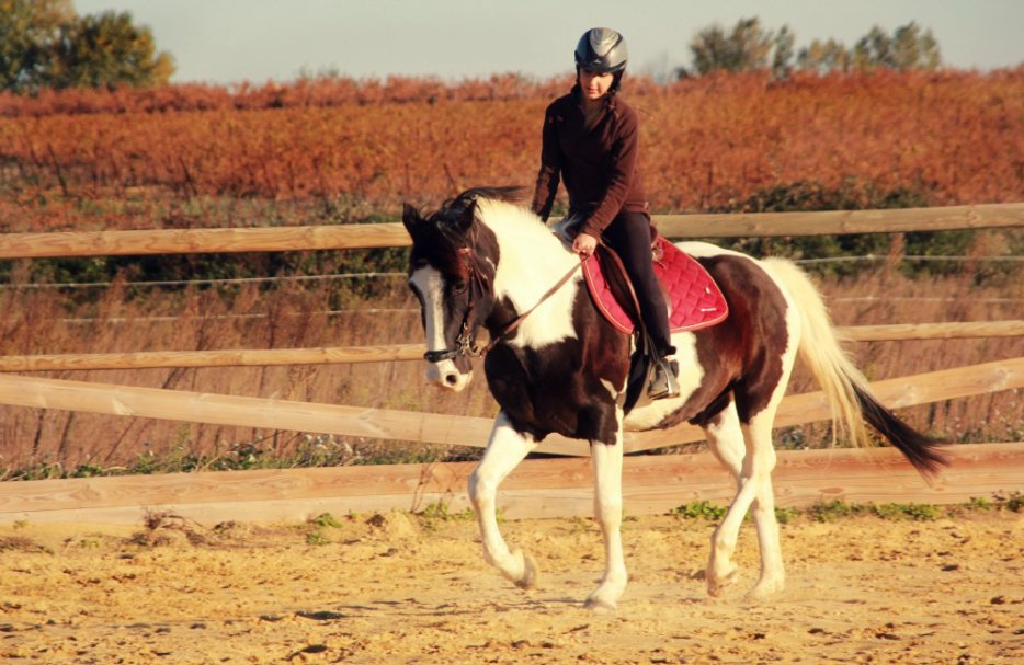 Enzo, mon poney indien de quatre lettres ♡