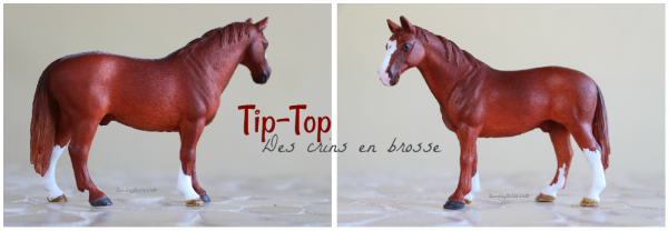 Tip-Top des crins en brosse
